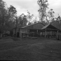 Brown's Saw Mill, Bago Forest