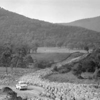 Car driving through mob of sheep, near Talbingo