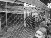 1951-Gurwood Street School Excursion6.jpg